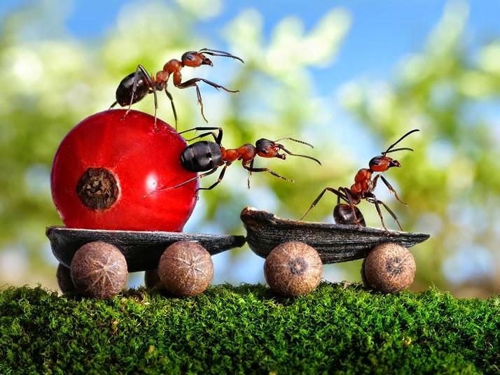 Сказка о муравье