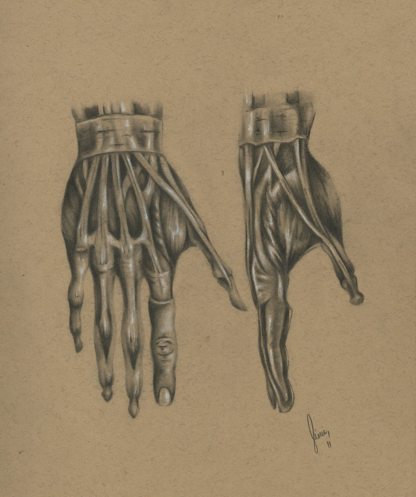 Jimmy Catanzaro Art & Illustration: Anatomical Studies Of The Hand