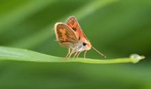 أحلى صور الفراشات الصغيرة