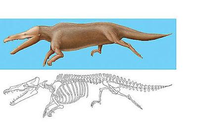 protocetidae Maiacetus