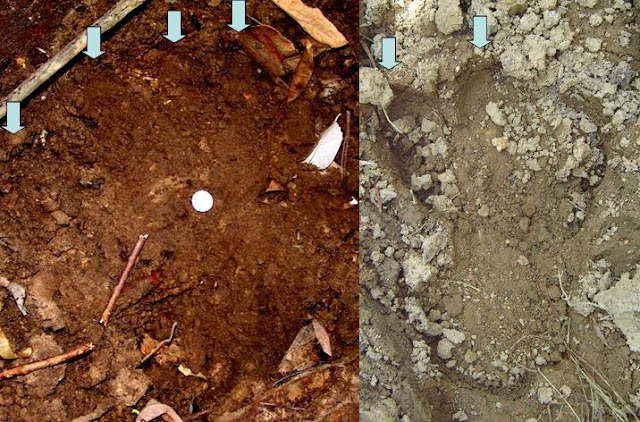 Hundreds of Bizarre Footprints Attributed to Fearsome Bigfoot-Like Monster Stalking Malaysia