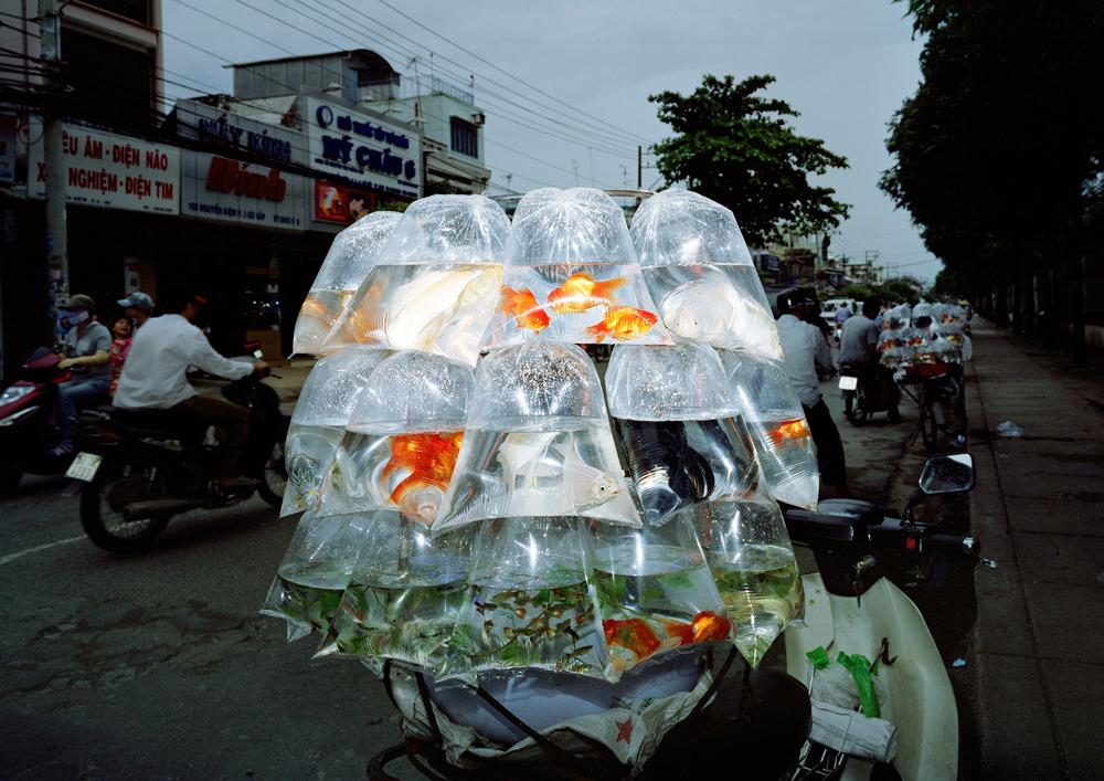 ©Sunghee Lee - Panneaux & Domestiqués. Fotografía | Photography