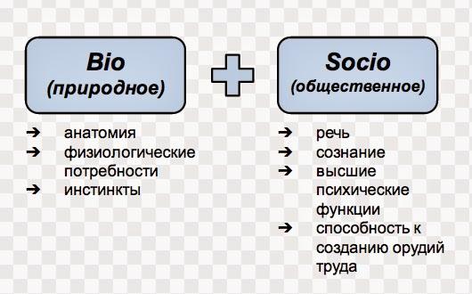 Человек как биосоциальное существо