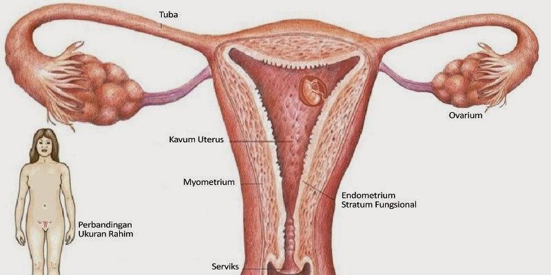 Obat kanker rahim herbal resep dokter