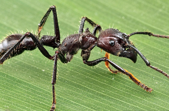 चींटी के काटने पर क्या करें