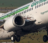 شنو يصير لو الطيور تصادمت مع طياره ؟!