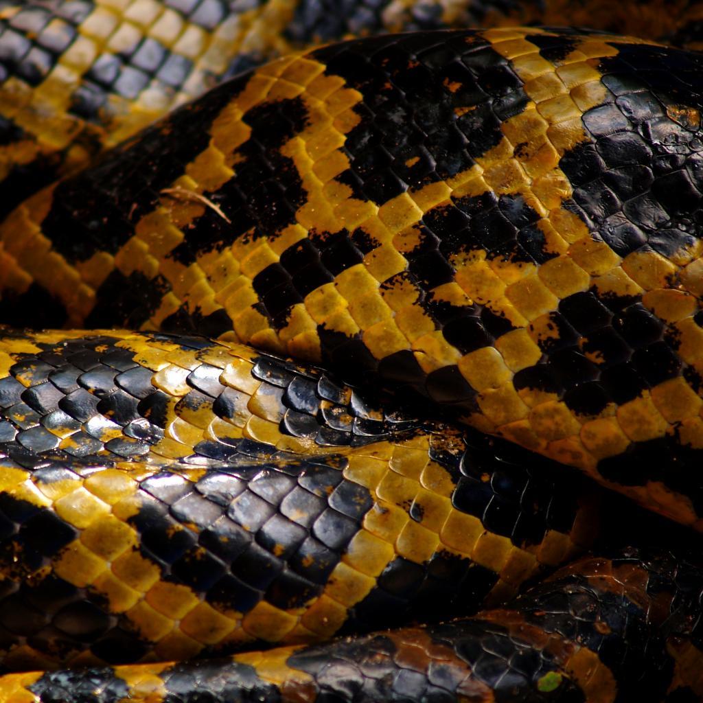 Yellow snake wallpaper