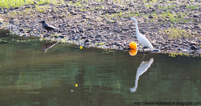 birds drinking water from pond