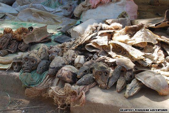 7 Tempat Wisata Paling Menakutkan di Dunia: Pasar Jimat Akodessewa - Lomé, Togo