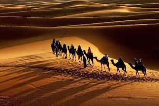 3 in 1 Bangsa Arab Karavan Camel