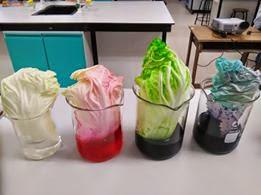 Antara perkongsian idea p&p Sains yang berlangsung di facebook 'Cikgu Sains Kreatif'