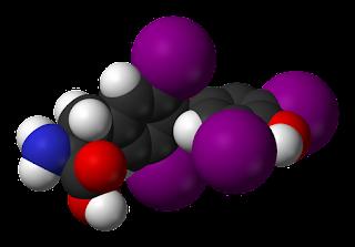 Modelo de la tiroxina