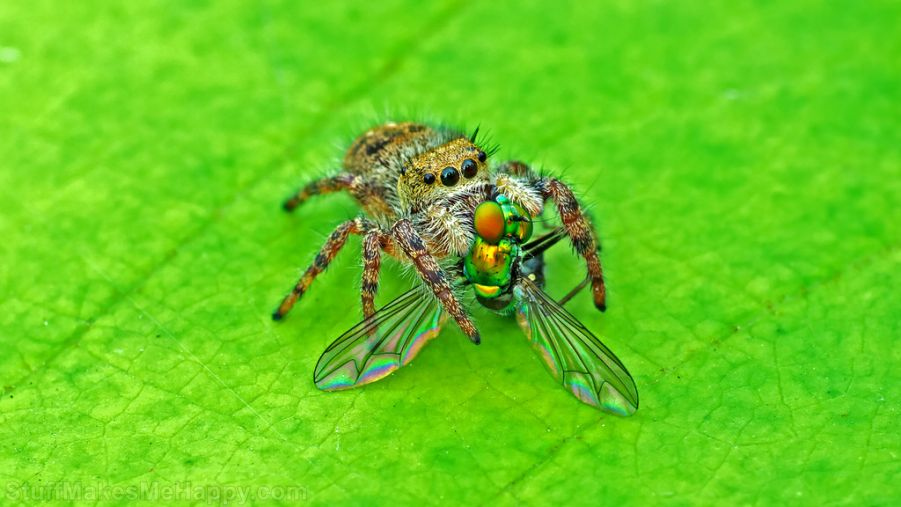 Truly Wonderful Spider Macro Photography by Tibor Nagy