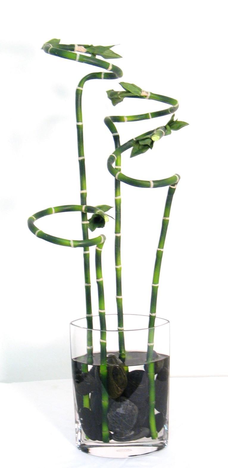 Bamboo worktops photos lucky bamboo vase lucky bamboo vase4 lucky bamboo vase reviewsmspy