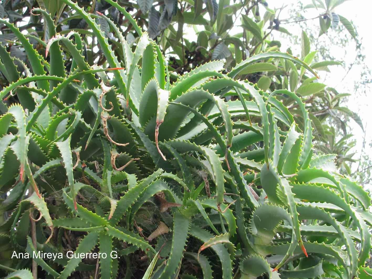 Ecuador personajes y especies gal pagos y continente for Ver plantas ornamentales