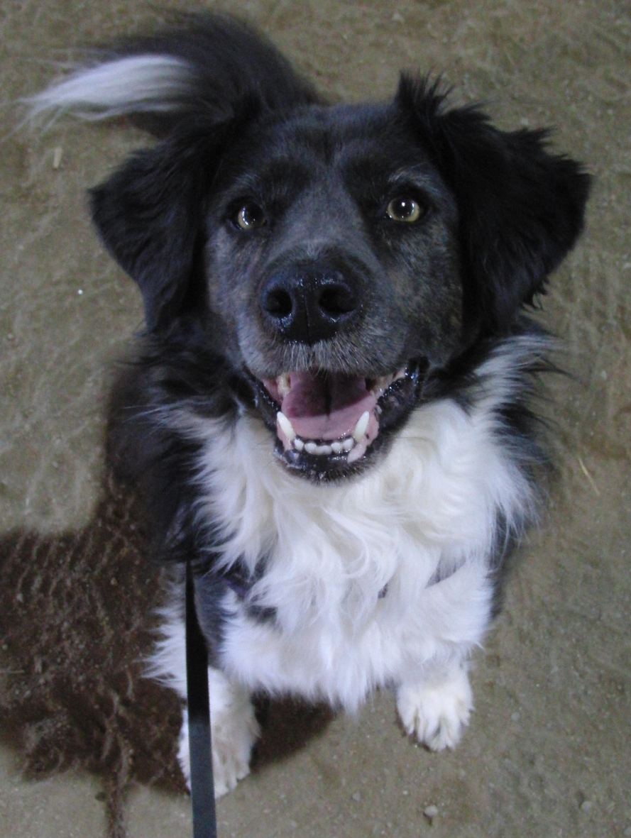 Paws Crossed Dog Rescue Colchester