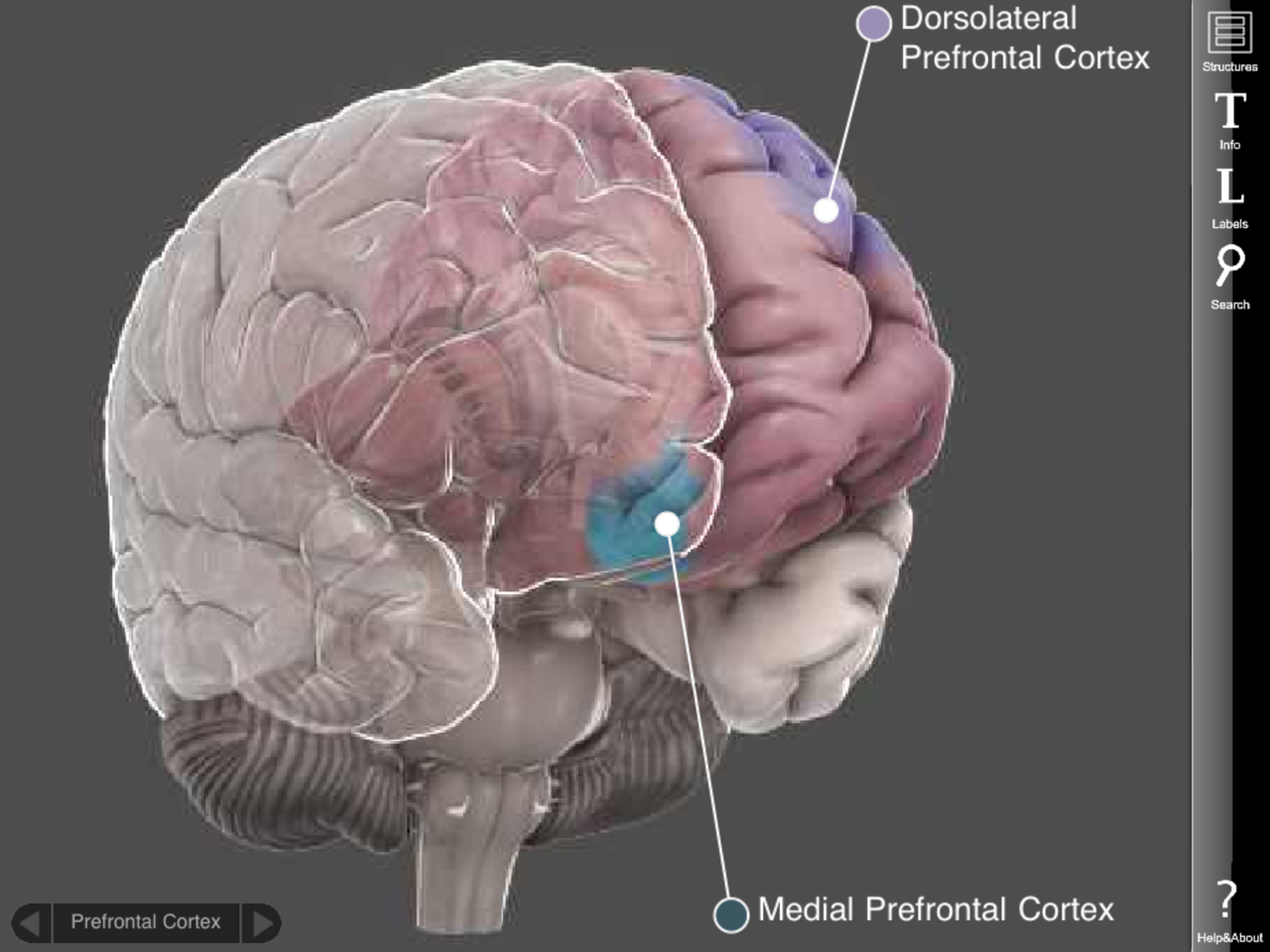 The Adolescent Brain: TED Talk By Blakemore   Brain Posts