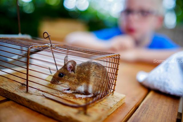 Mäusejagt