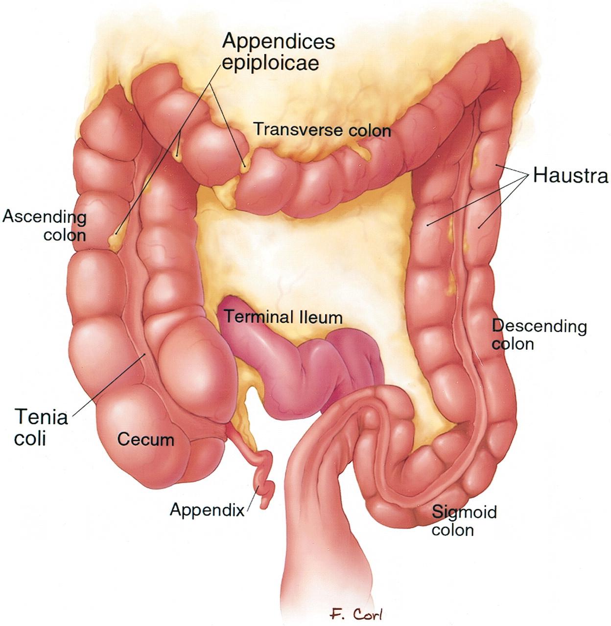 OSTOMY CARE : ostomy