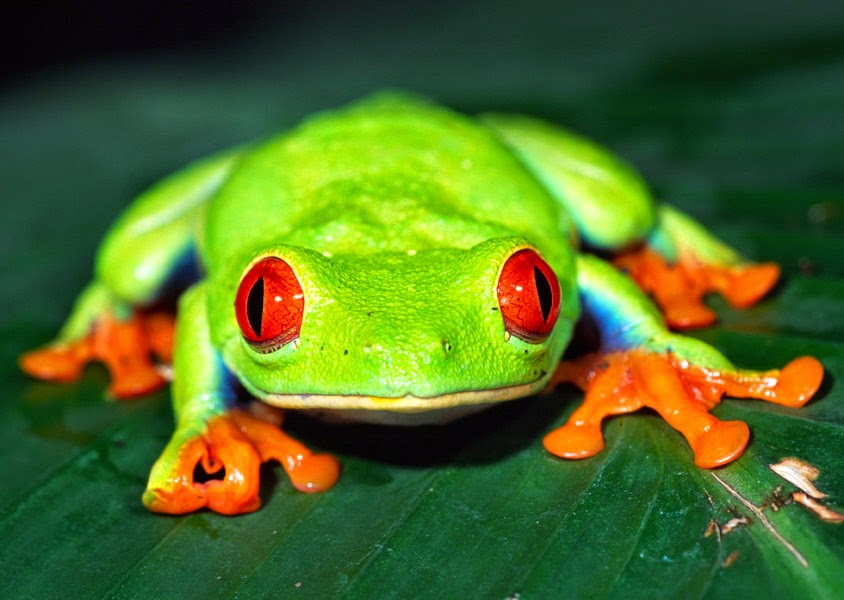 what is your frog