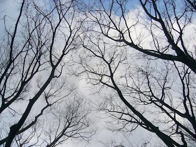 大阪府・深北緑地ウォーキング 芝生広場