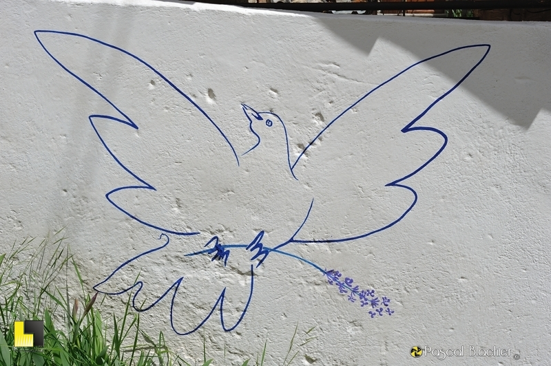 fresque de colombe avec brin de lavande à valdrome photo pascal blachier