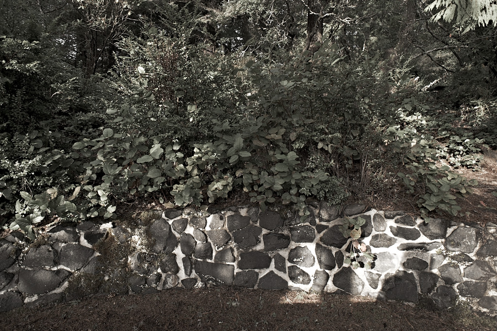 wall, face, rock, forest, nature, america, trees, bushes, wildlife, rock and roll, behind the wall,things to enjoy,all the things we like,wake up, at noon, now i am here,stay here, facing the wall, kiss my cheeks, babe