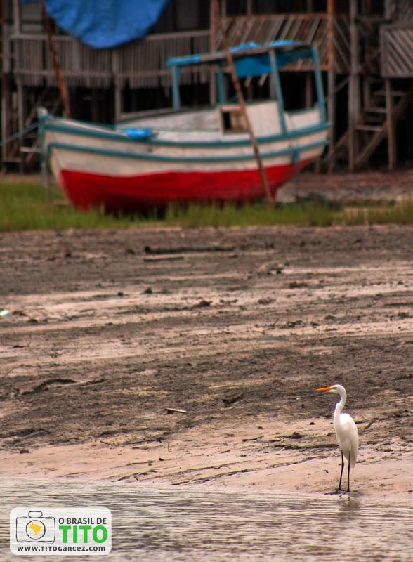 Garça e barco próximo ao porto de Marudá, em Marapanim, no Pará