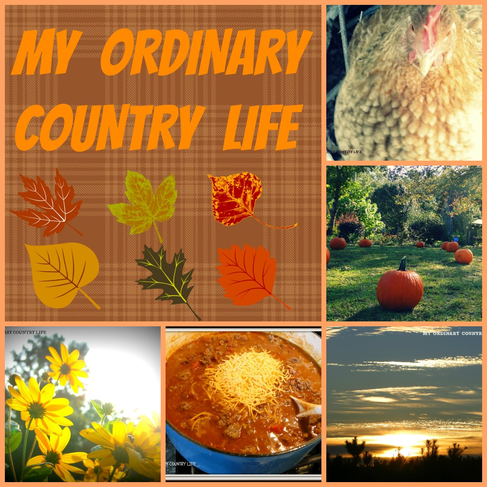 MY ORDINARY COUNTRY LIFE