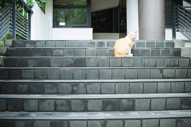 A square cat