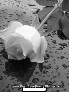 Best Urdu Poetry, bewafa poetry, Chalo Mana! Kisi Sa'at, Kisi Lamhe, Urdu Bewafa Poetry, urdu Sad Poetry, urrdu sad poetry, چلو مانا     کسی ساتھ کسی لمحے,  Beutiful Rose, urdu very sad poetry , love urdu poetry, love urdu poem, love urdu poems, urdu friendship poetry, poetry, urdu poetry, best ever poetry, urdu miss you poetry, hindi best poetry,
