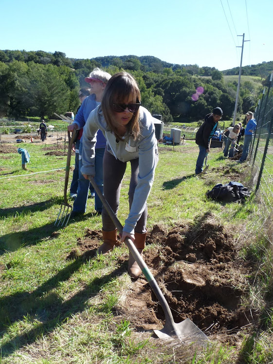 Jenny's Tree Planting Along the Fence Line