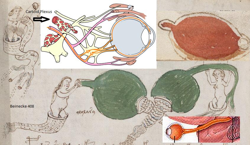 Voynich Manuscript Translation of The Voynich Manuscript