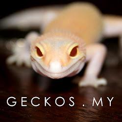 Geckos. My