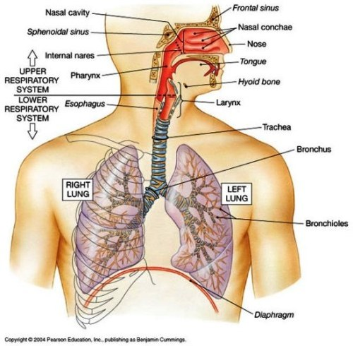 Define What is The Symptoms of Upper Respiratory Infection ...