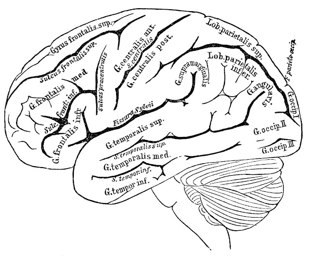 Brain Coloring Pages6