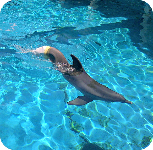 dolphin tale, winter, clearwater aquarium