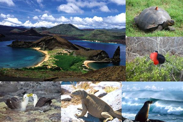 Galapagos Ecuador  city photos gallery : GALAPAGOS | Ecuador Noticias