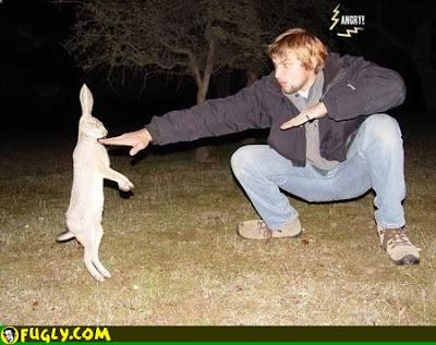 conejos Imagenes de conejos..