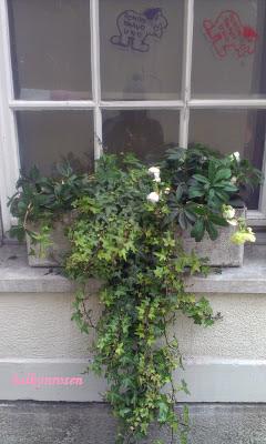 Balkonkasten im Winter