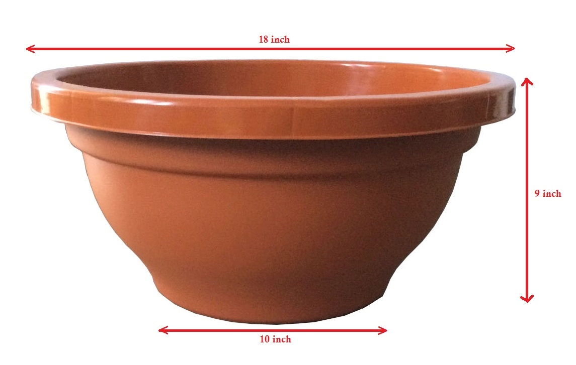 Bonsai Trees And Plants In Ahmedabad For Sale Bonsai Pots Trays