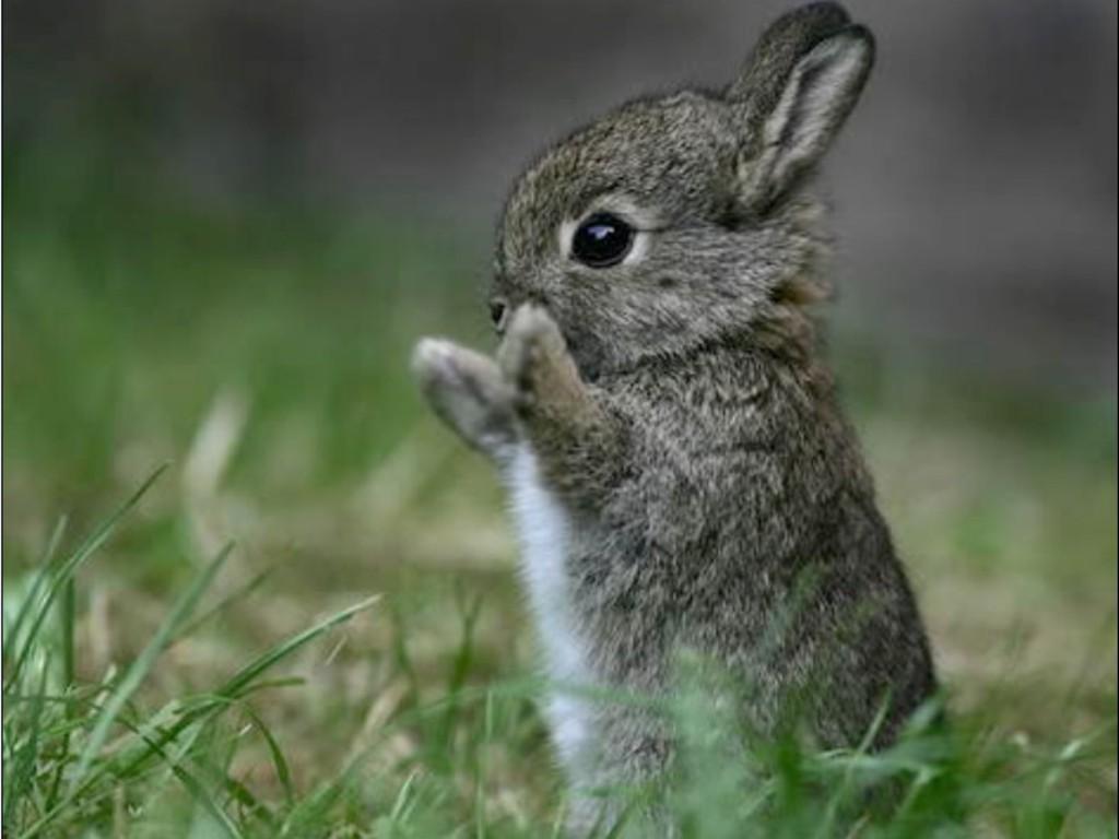 http://2.bp.blogspot.com/-7ECxga_2Qjw/UEdWfpejOzI/AAAAAAAAABk/rjLX9t5mmgU/s1600/a_cute_bunny_for_Tamy__Wallpaper_qeebe.jpg