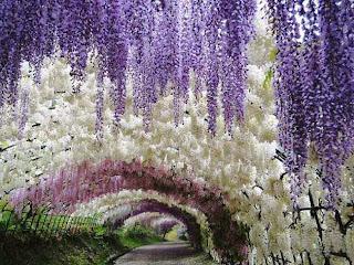 Terowongan Pohon dan Bunga