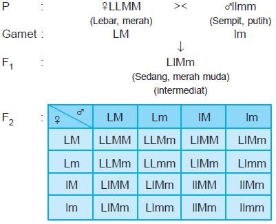 hukum mendel II