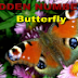 Hidden Numbers - Butterfly