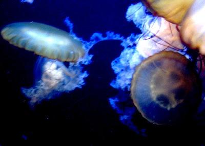 Image Result For Albuquerque Aquarium