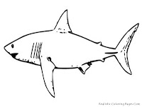 White Shark Coloring Pages Realistic