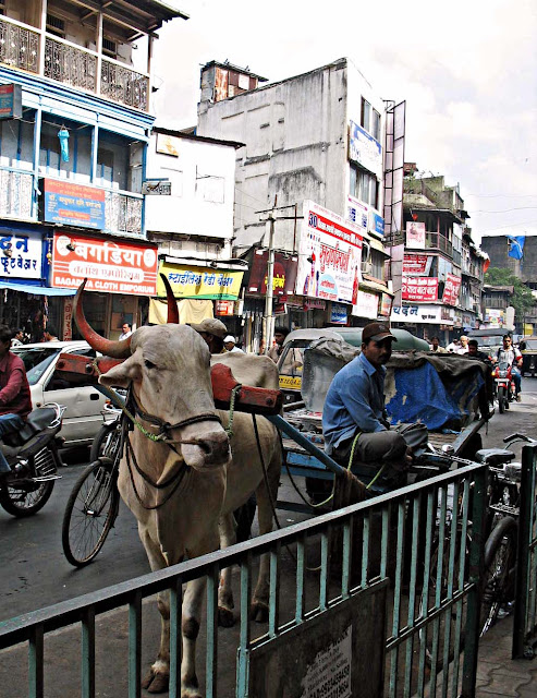 bullock cart in Pune, India