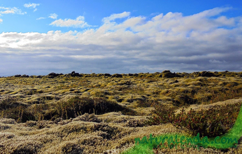 campo de musgo