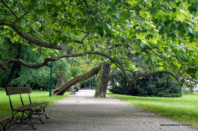 Włochy ogród drzewa platan pałacyk